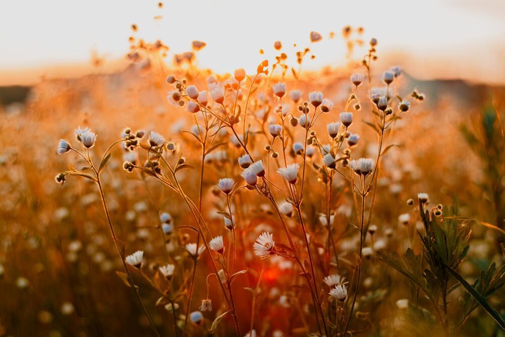Versier je terras met bloembakken: 5 tips